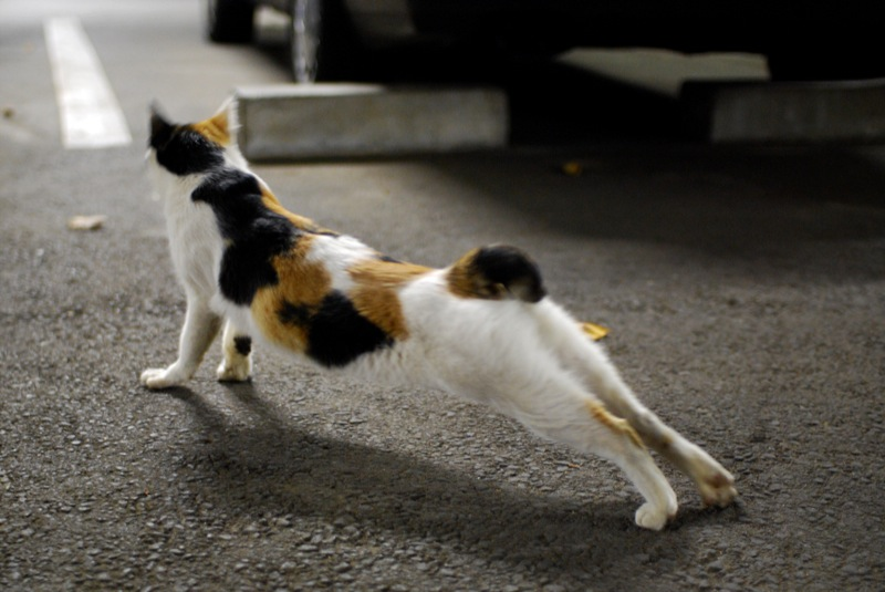I meet the cat in parking at night05 (2020194310)