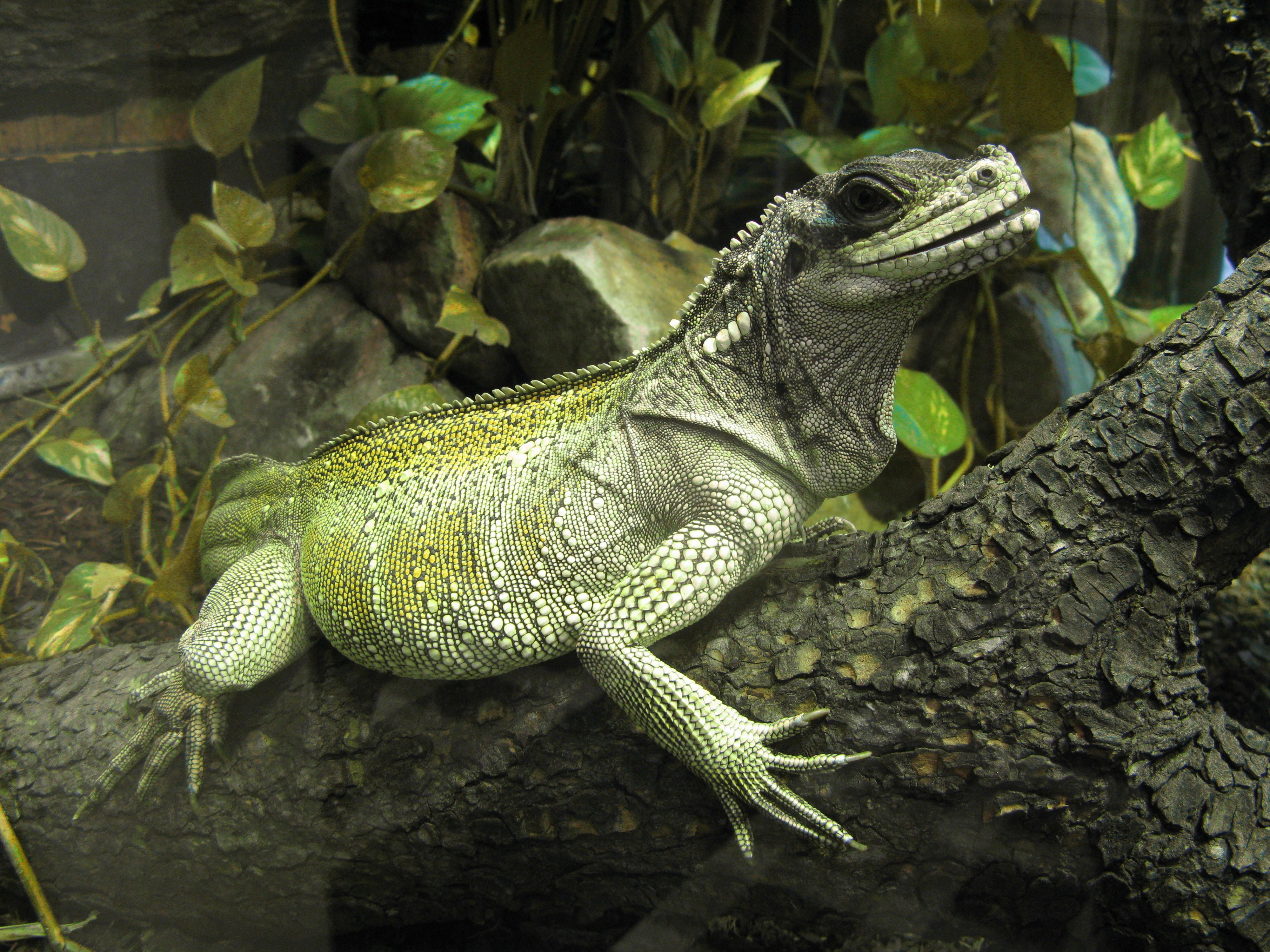 File:Jielbeaumadier hydrosaure weberi 1 mjp paris 2013.jpeg - Wikimedia Commons