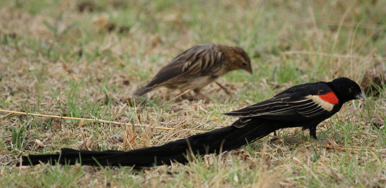 Early Bird Long Island