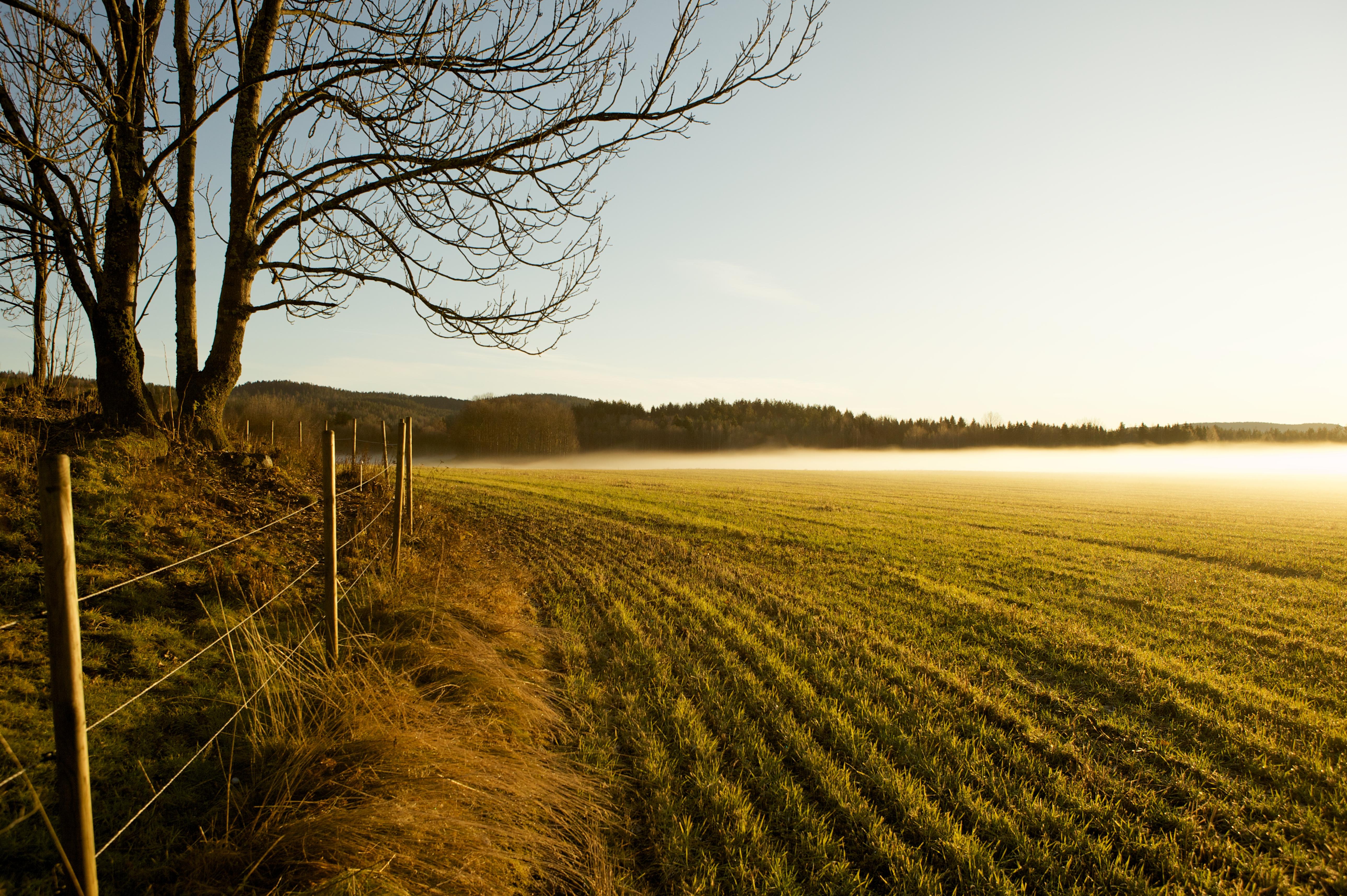 File:Misty field, Telemark, Norway.jpg - Wikimedia Commons