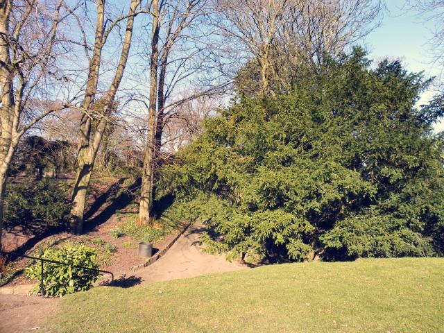 Mold Castle (motte & bailey), Mold - 2321514 7855565b