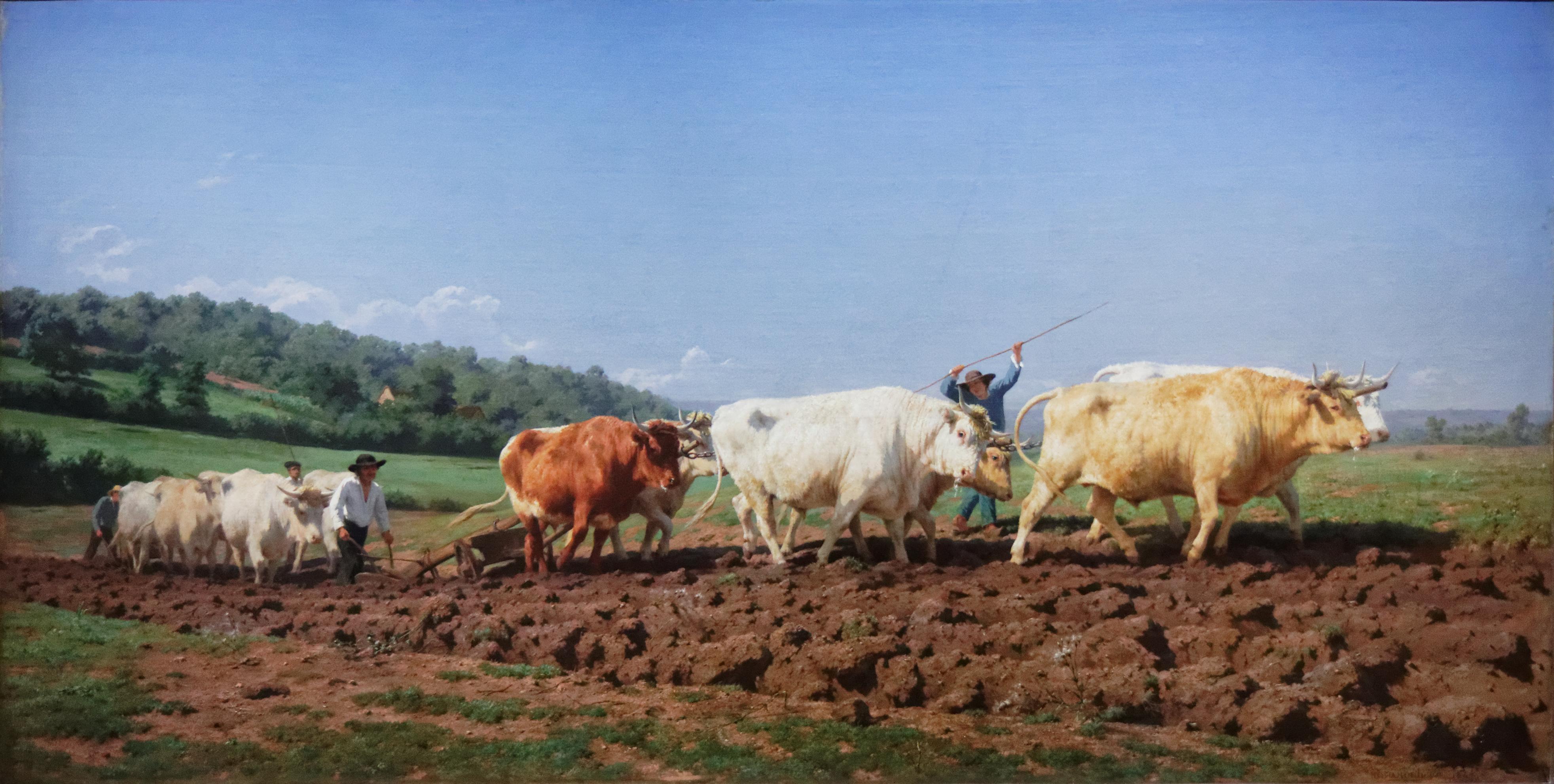 File mus e d 39 orsay rosa bonheur labourage nivernais - Cuadros de vacas ...