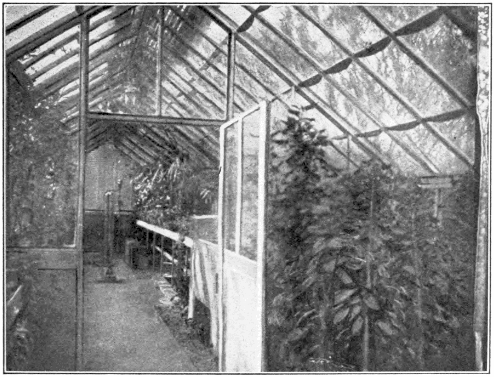 PSM V78 D599 Interior of the hothouse.png