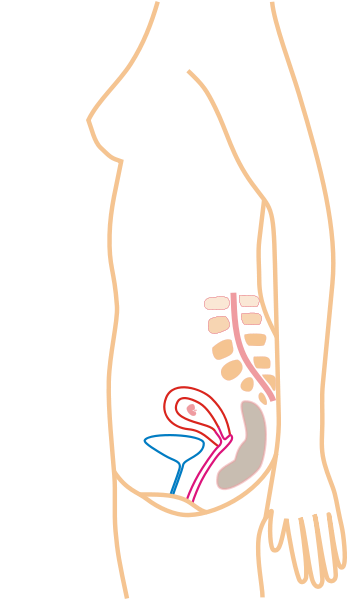File:Pregnancy month by month.png - Wikimedia Commons