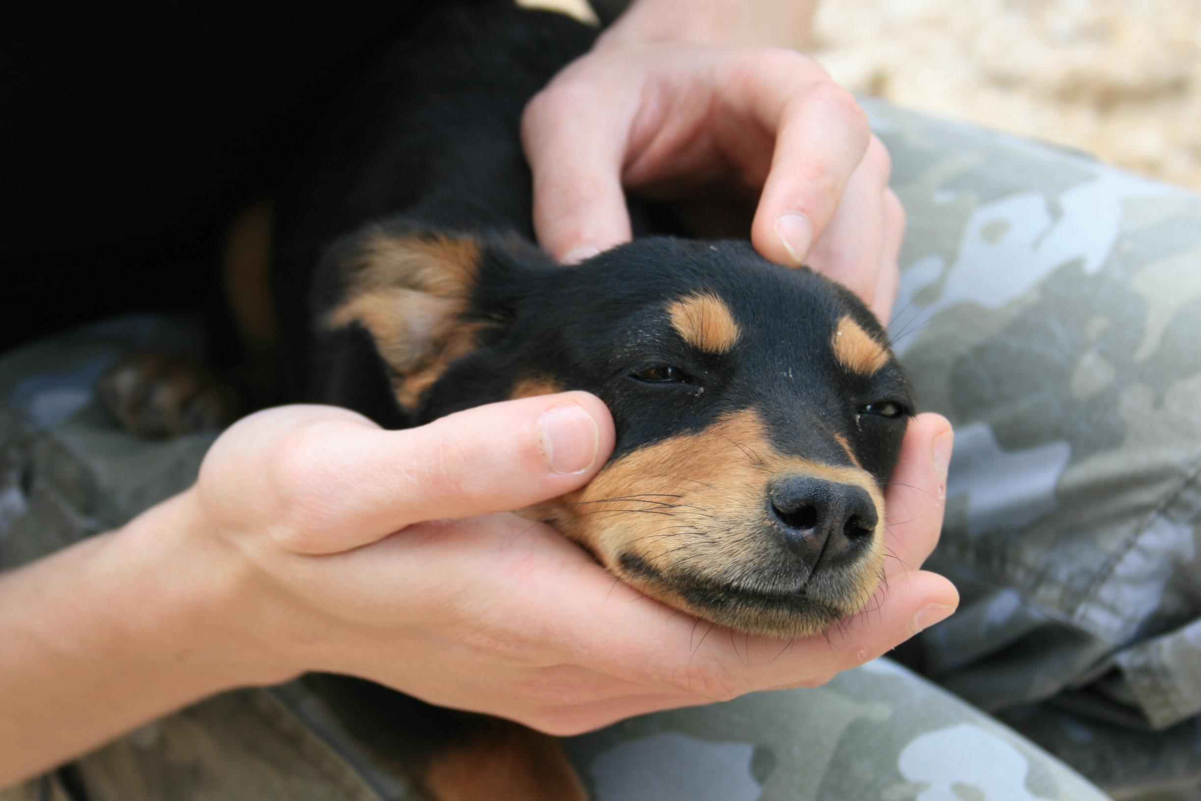 puppy arthritis