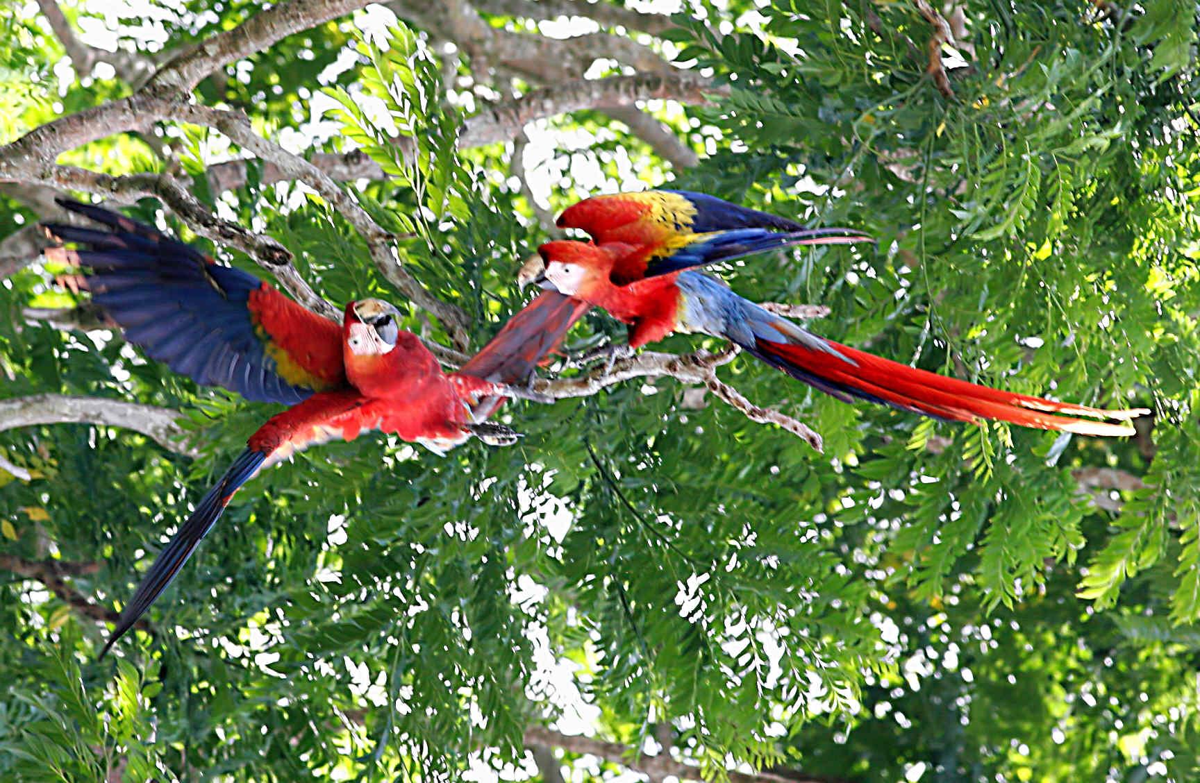 Costa Rica Nature Adventures Reviews