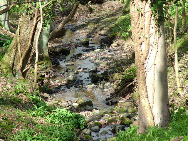 Stream in Robbs Dene - geograph.org.uk - 396601