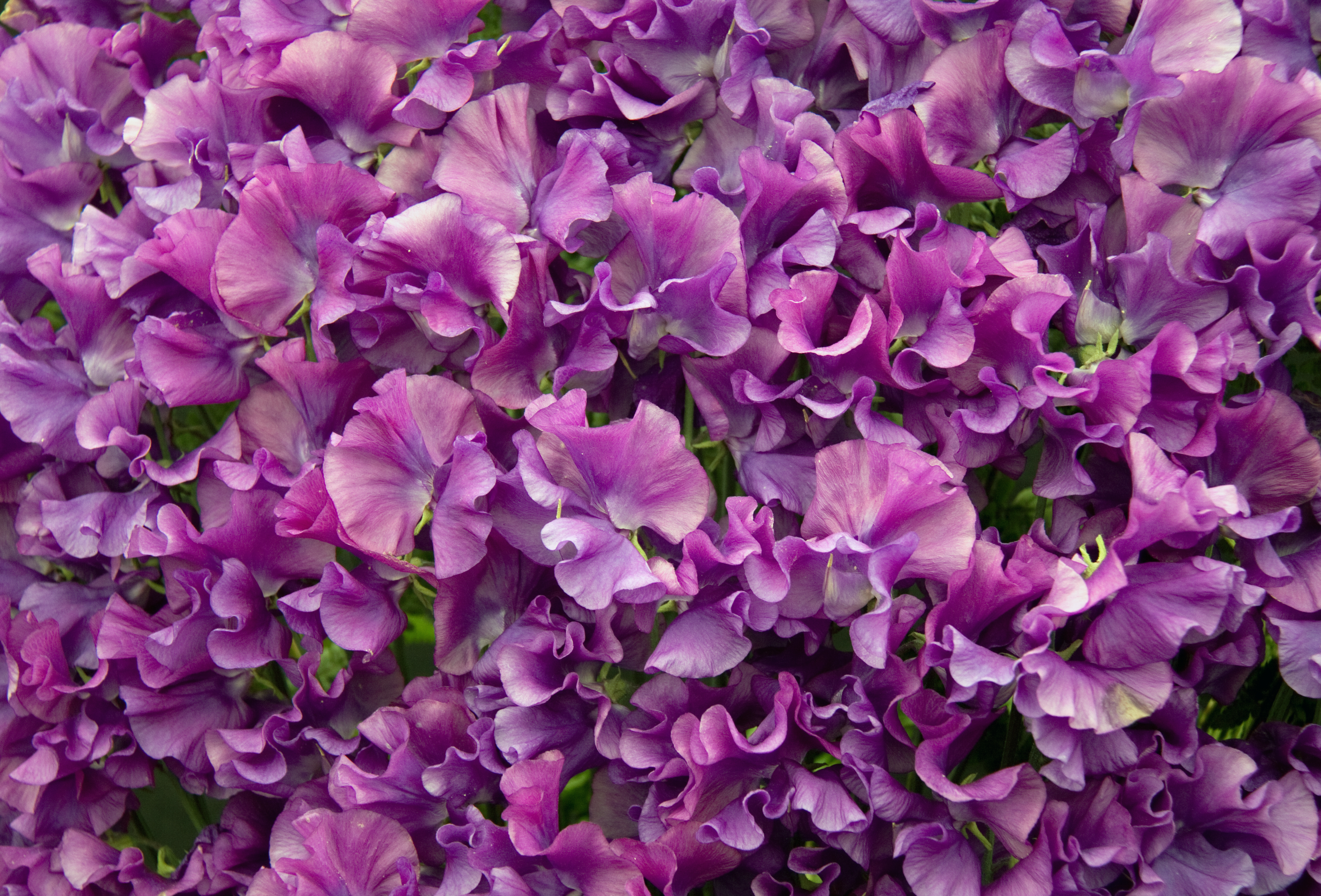 1000 images about Flowers Purple on Pinterest