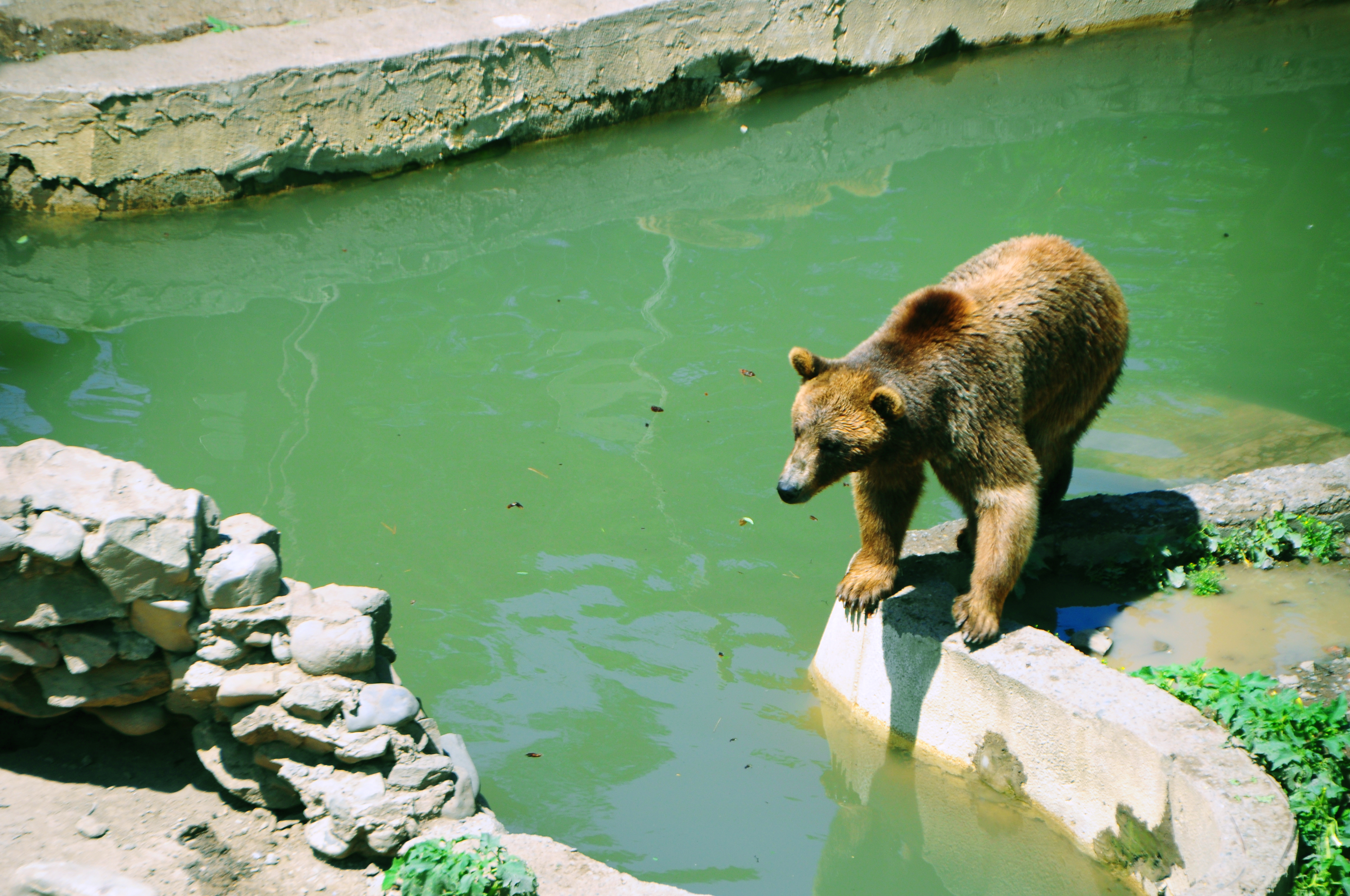 https://upload.wikimedia.org/wikipedia/commons/d/d4/Tbilisi_zoo_bear.jpg