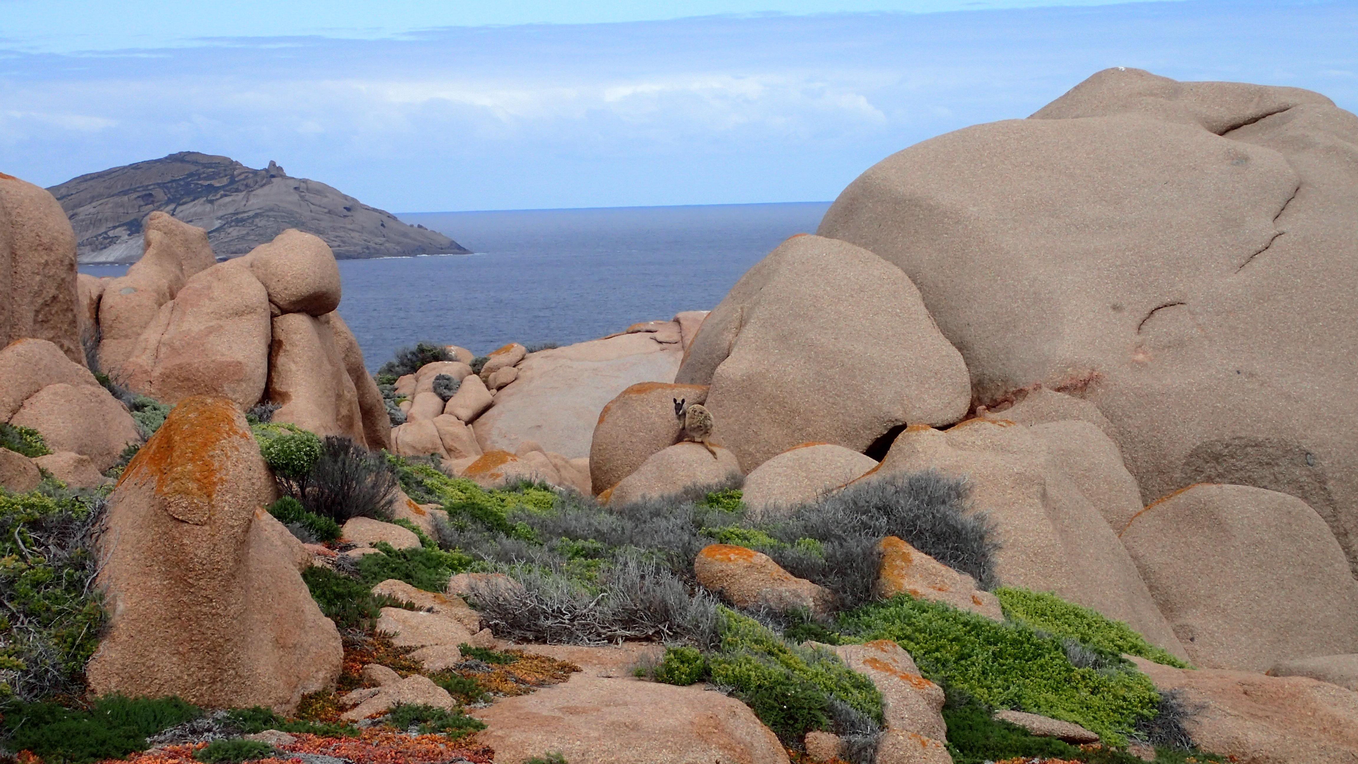 Datei:Top of Pearson Island, Pearson Island Rock Wallaby ...
