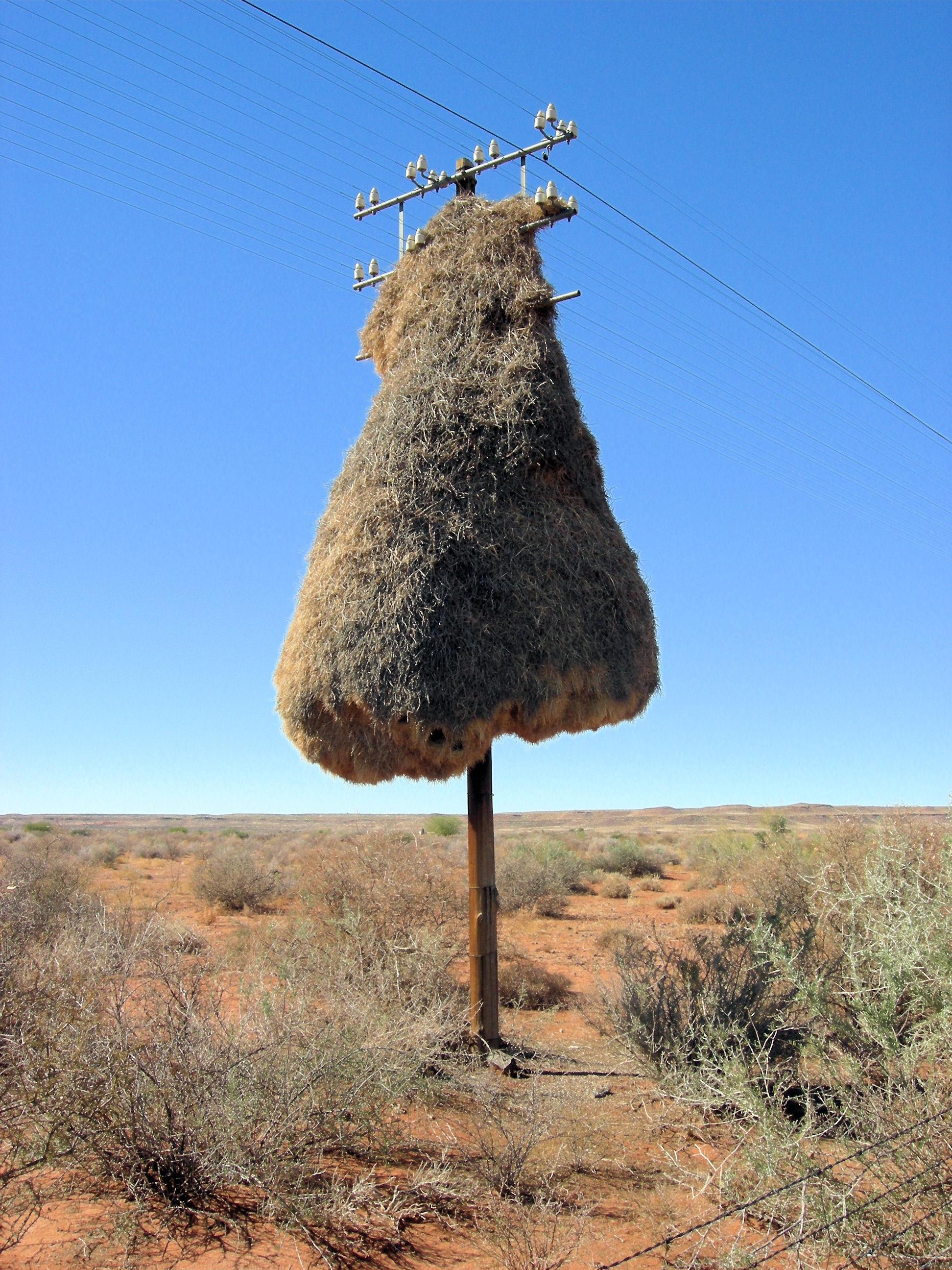 Weaver bird nest pictures - photo#18