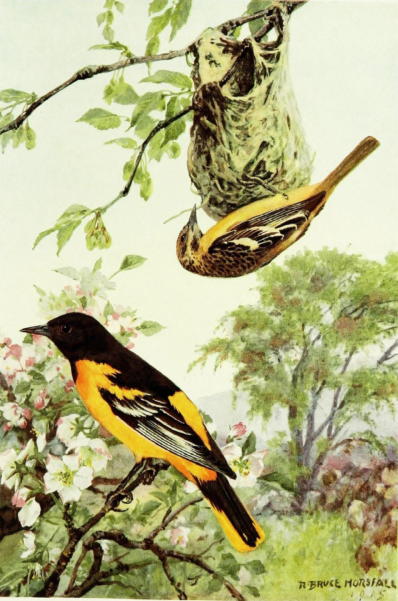 cornell university bird sounds