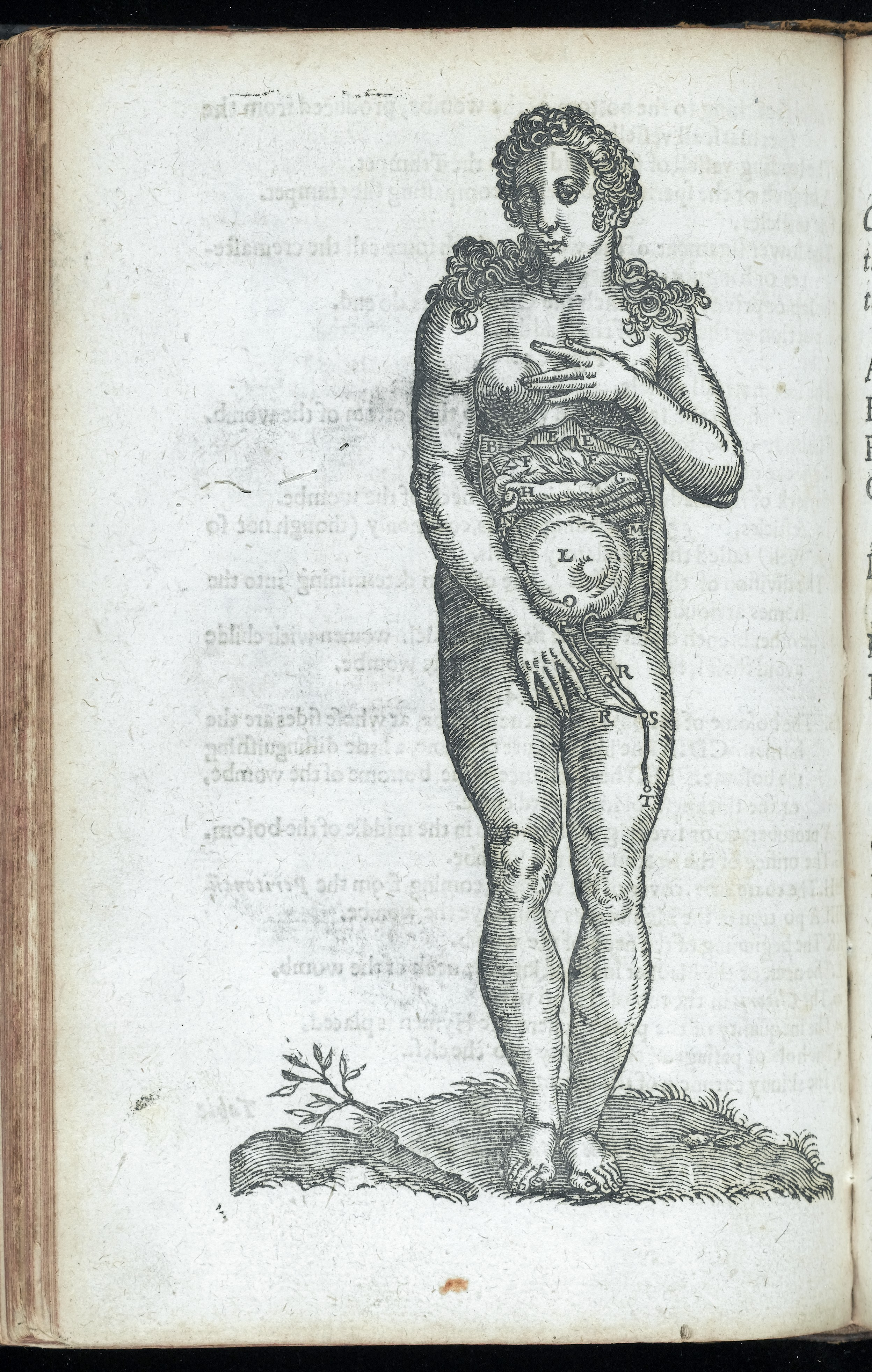 Fileanatomical Illustration Of A Pregnant Woman Wellcome L0046458