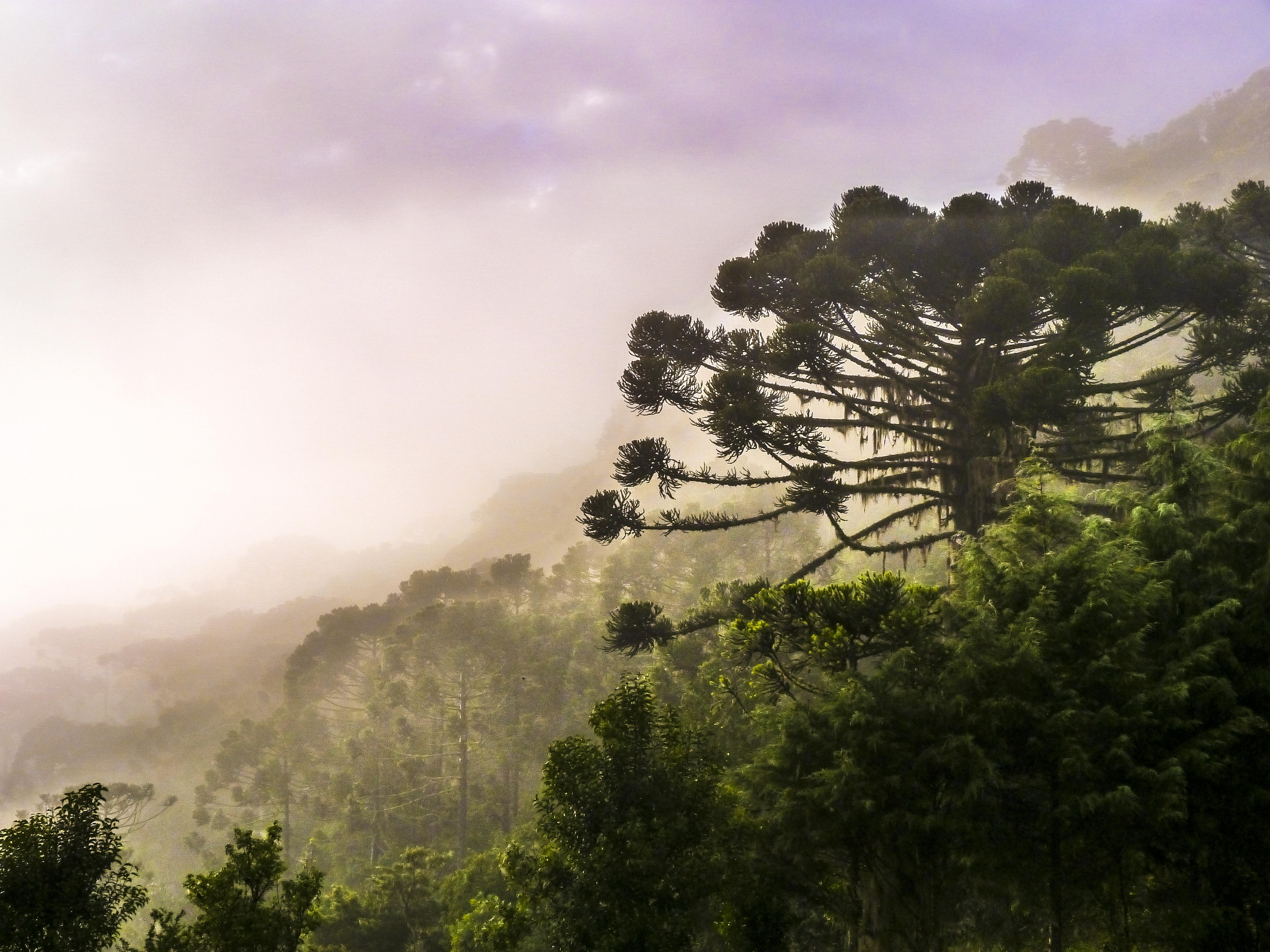 Previsão do tempo para Santa Catarina final de semana