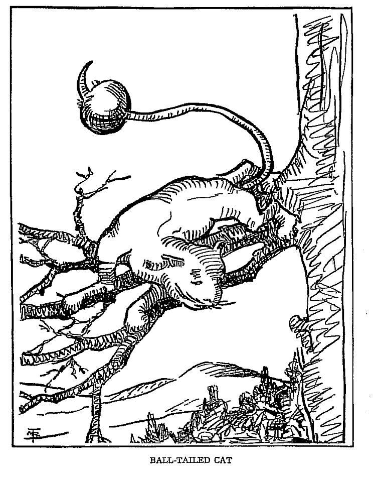 Illustration of an American mythical ball-tailed cat.