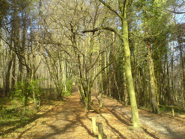 Bridle path in Cuckoo Wood - geograph.org.uk - 740898