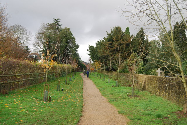 Cherry Avenue, Bearsted Woodland Trust - geograph.org.uk - 1610985
