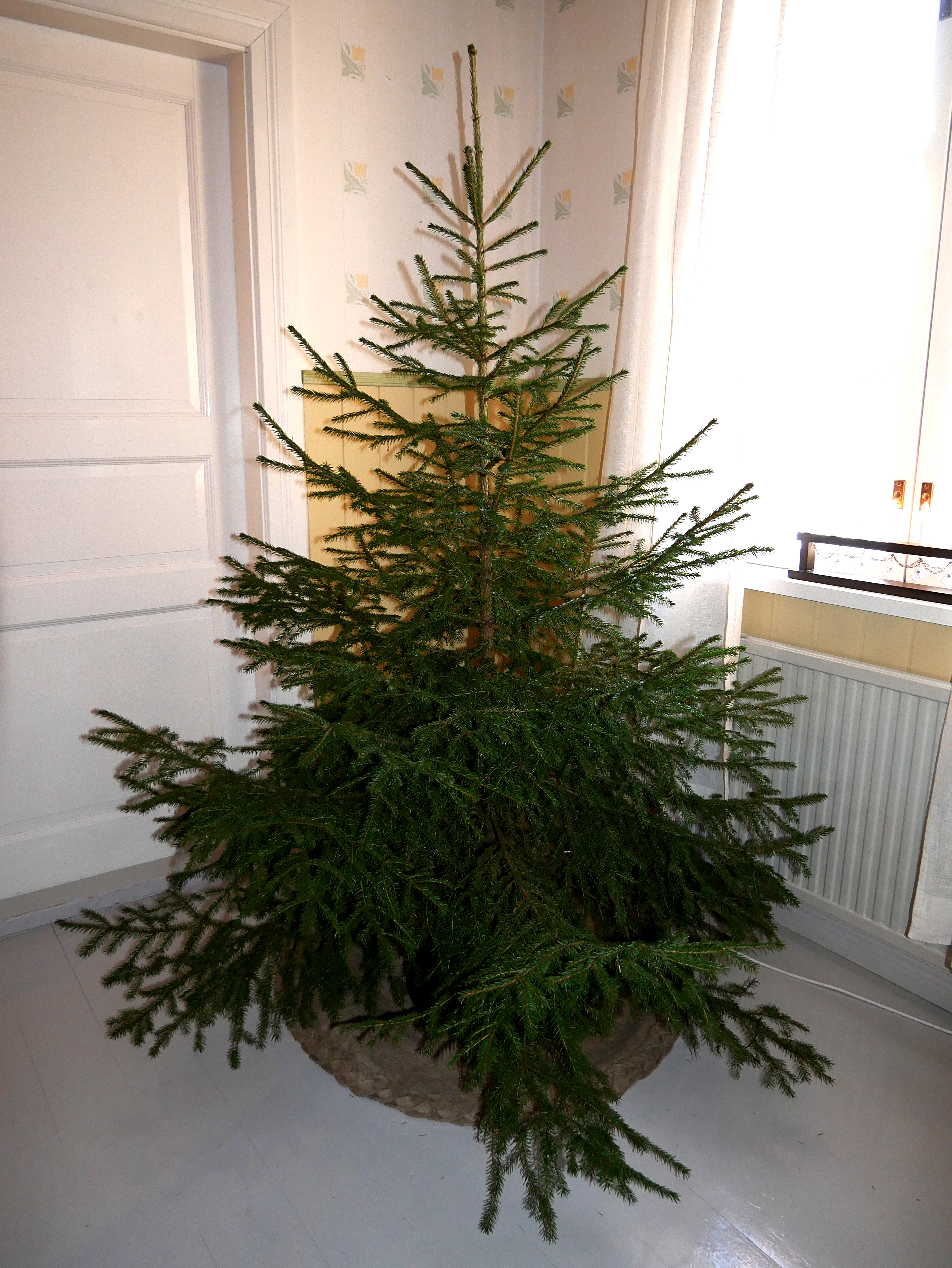 Decorate Christmas Tree Without Ornaments file:christmas tree without ornaments - wikimedia commons