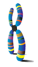 ChromosomeArt.jpg