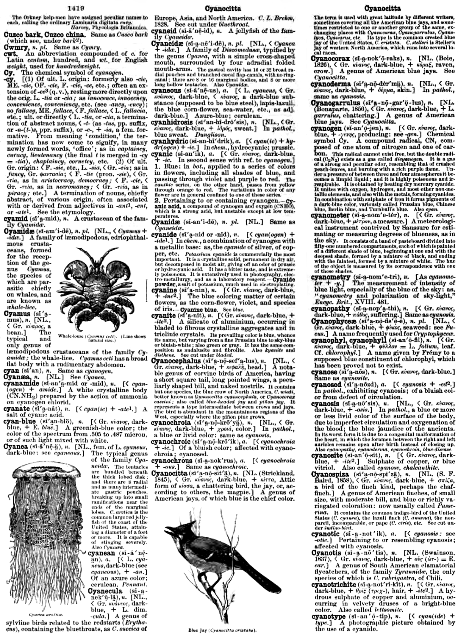 File:Cyan in Dictionary 1889 png - Wikimedia Commons