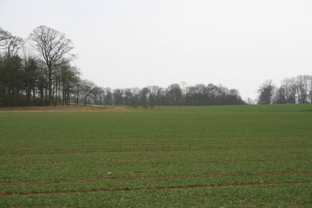 Deer on the Grimsthorpe Castle Estate - geograph.org.uk - 334467