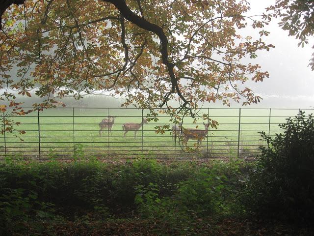 Deer seen from Addison's Walk, Magdalen College, Oxford 2008