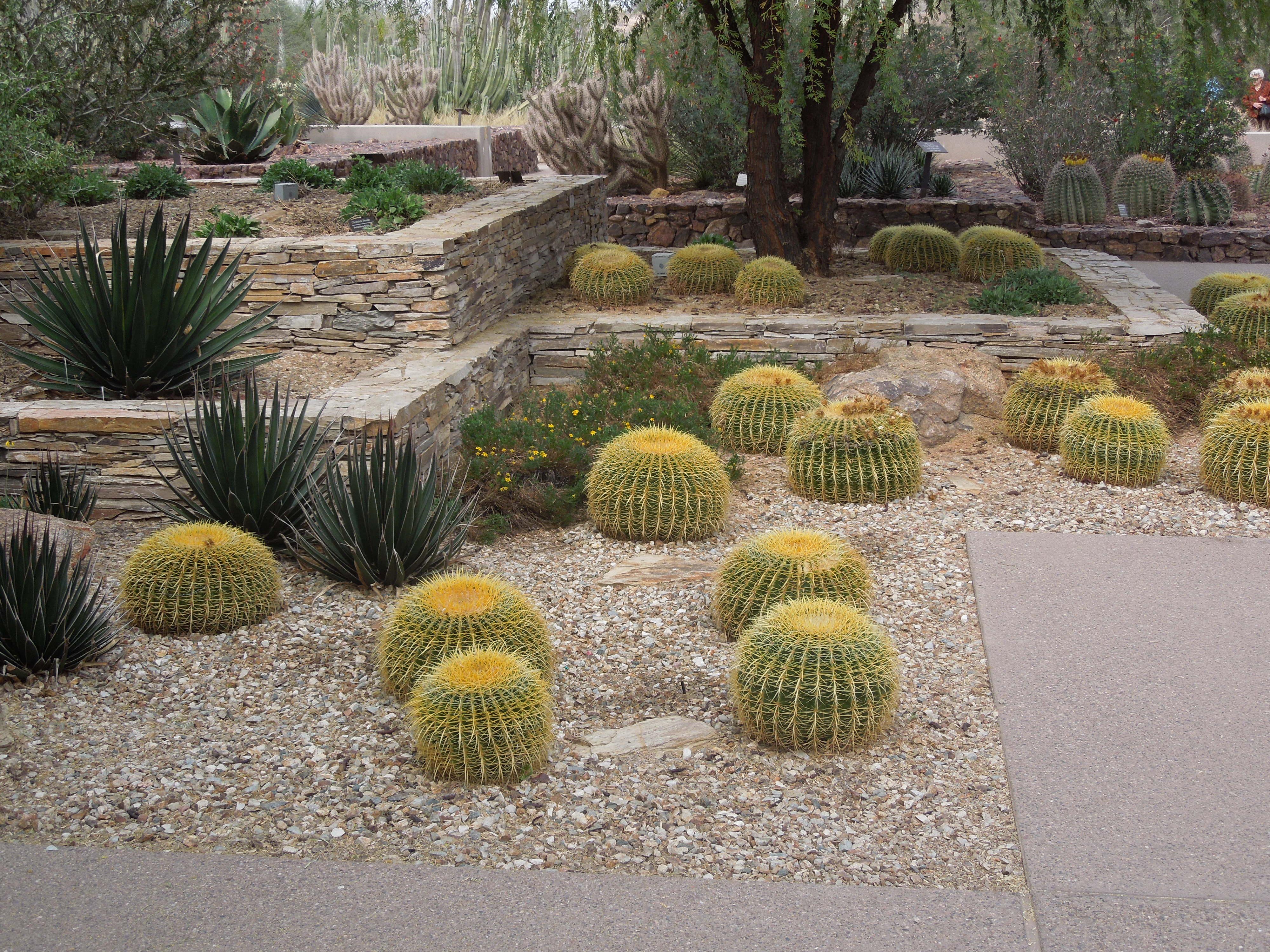 File Desert Botanical Garden Phoenix Arizona 1 Jpg