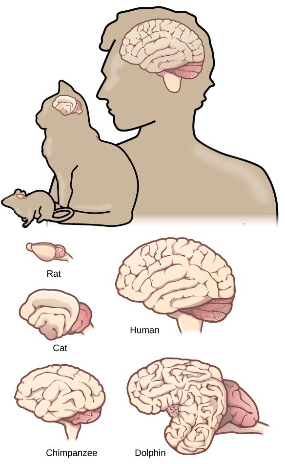 lifespan of cats average relationship