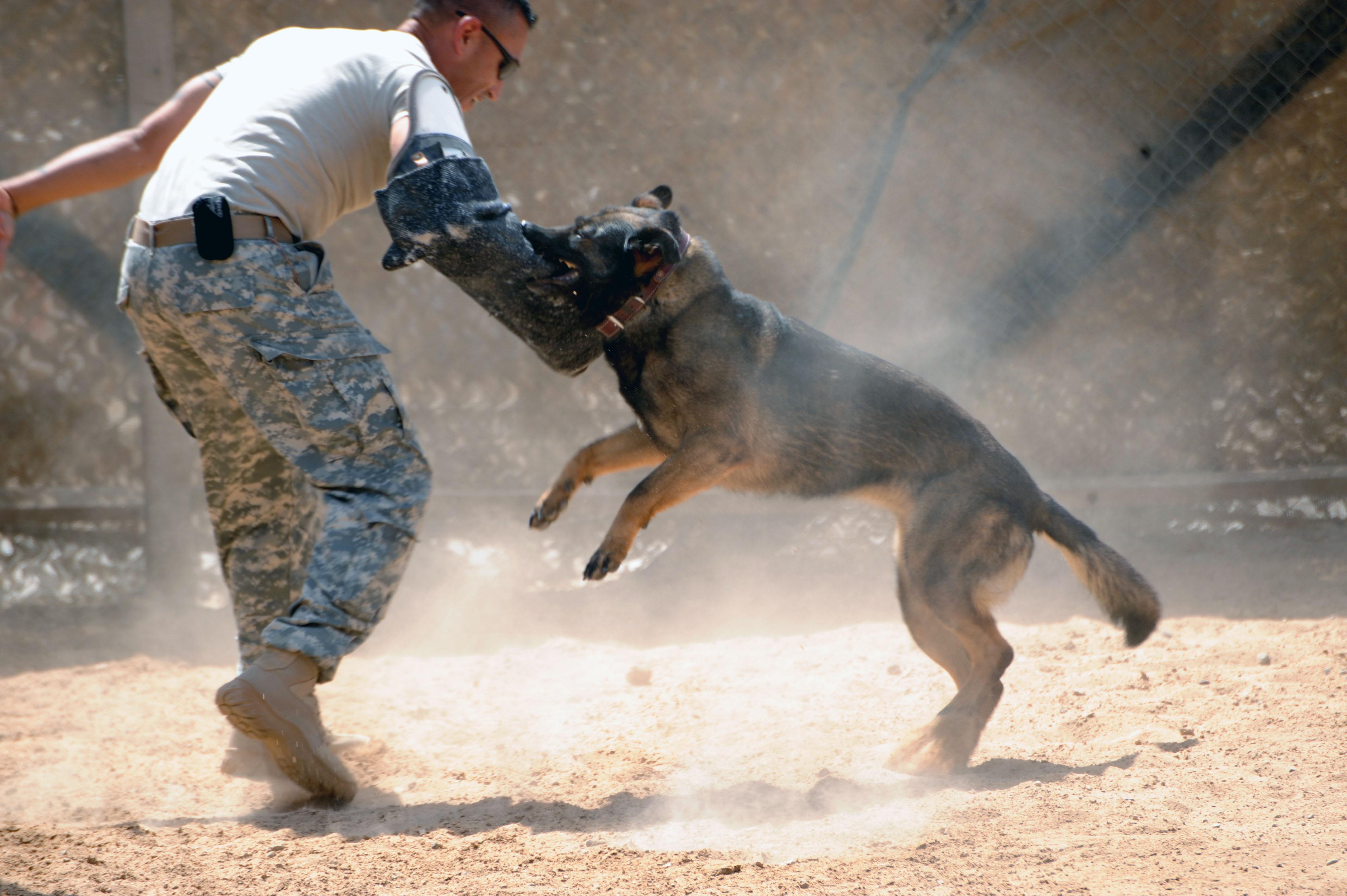 Hunting Dog Training Grand Forks Nd