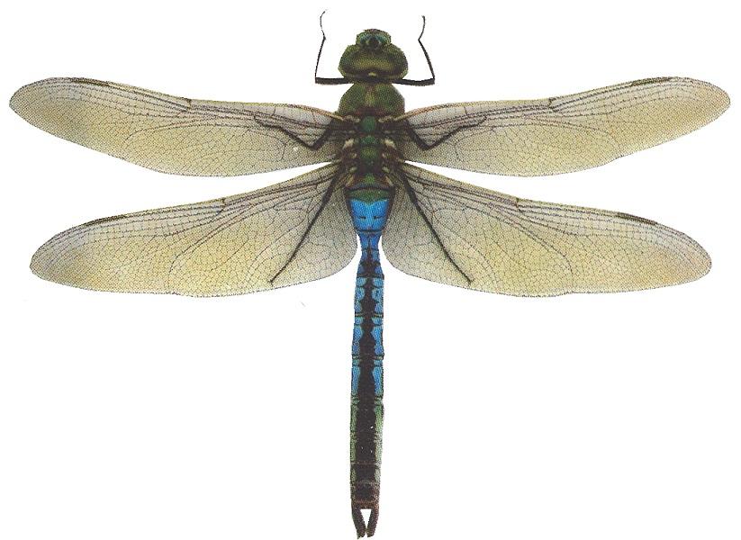 dragonfly in amber pdf español