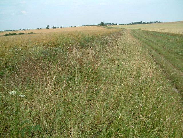 Icknield Way - geograph.org.uk - 204278