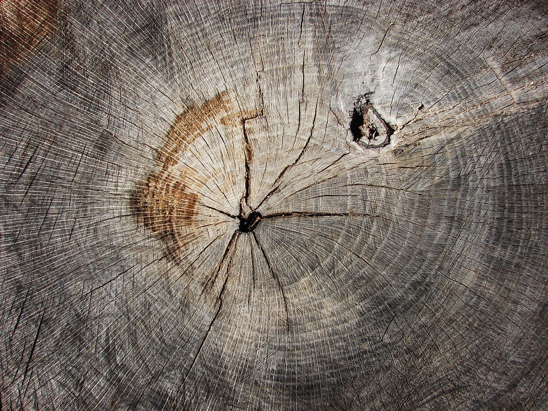 Oak Rings Texture
