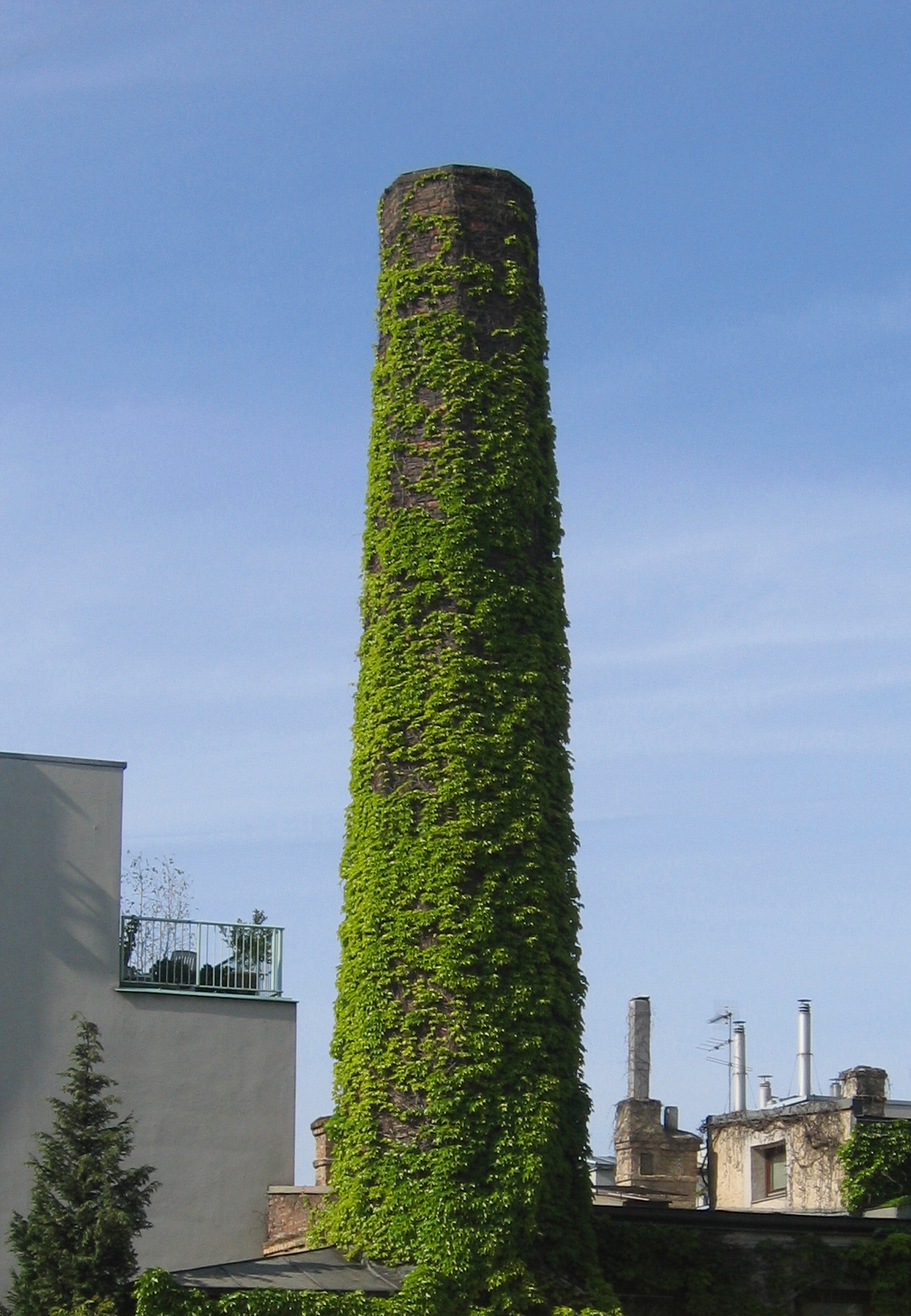 Climbing plant covering a chimney