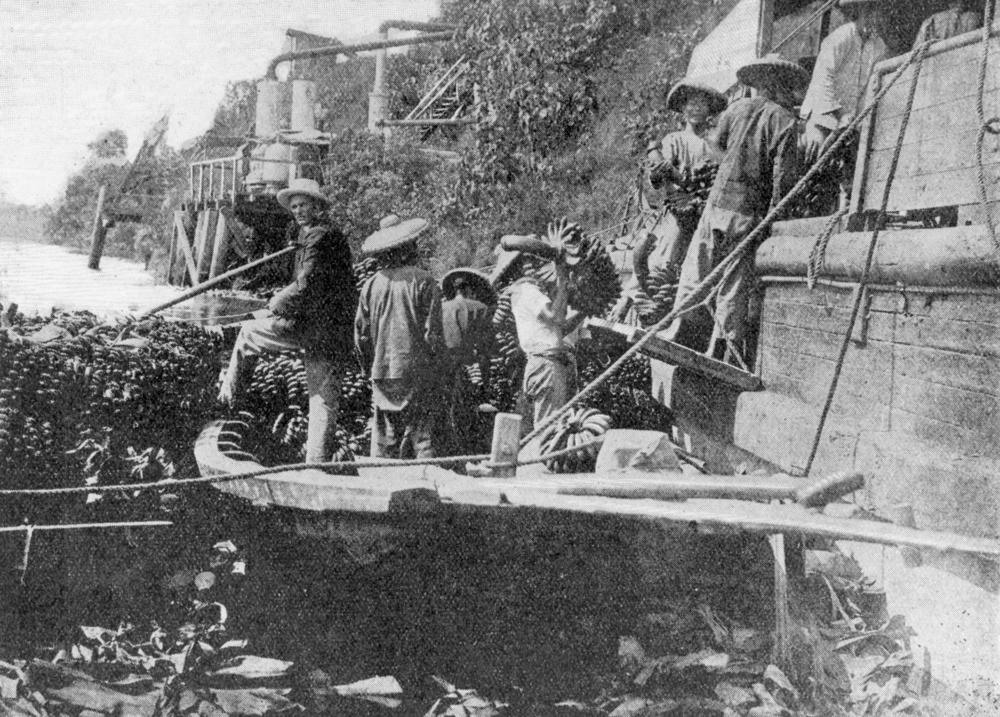 StateLibQld 1 176247 Chinese labourers loading bananas onto a steamer at Geraldton, Queensland, 1906.jpg