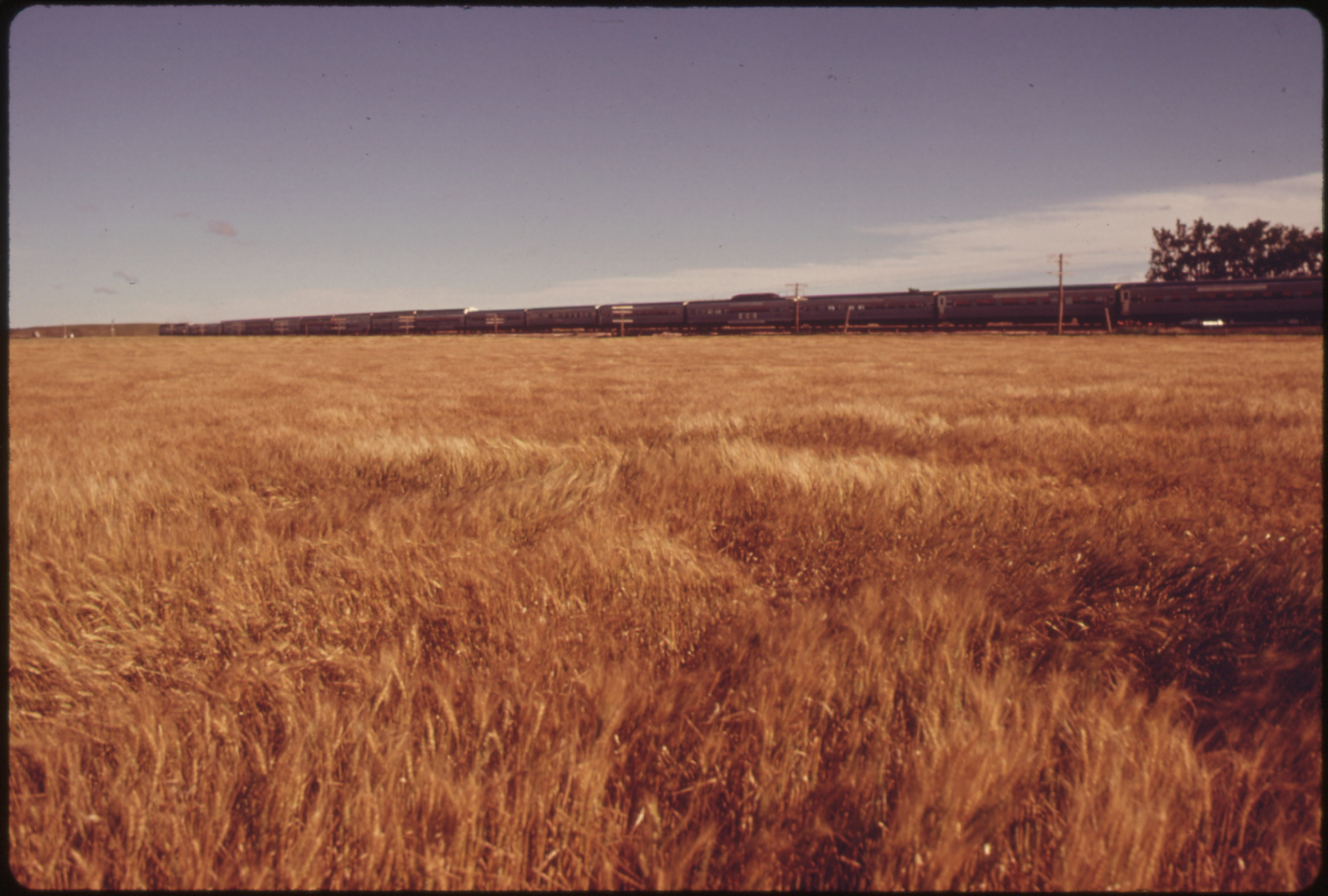 File:THE SOUTHWEST LIMITED PASSES RIPENING WHEAT FIELDS NEAR DODGE CITY, KANSAS. TWO PASSENGER ...