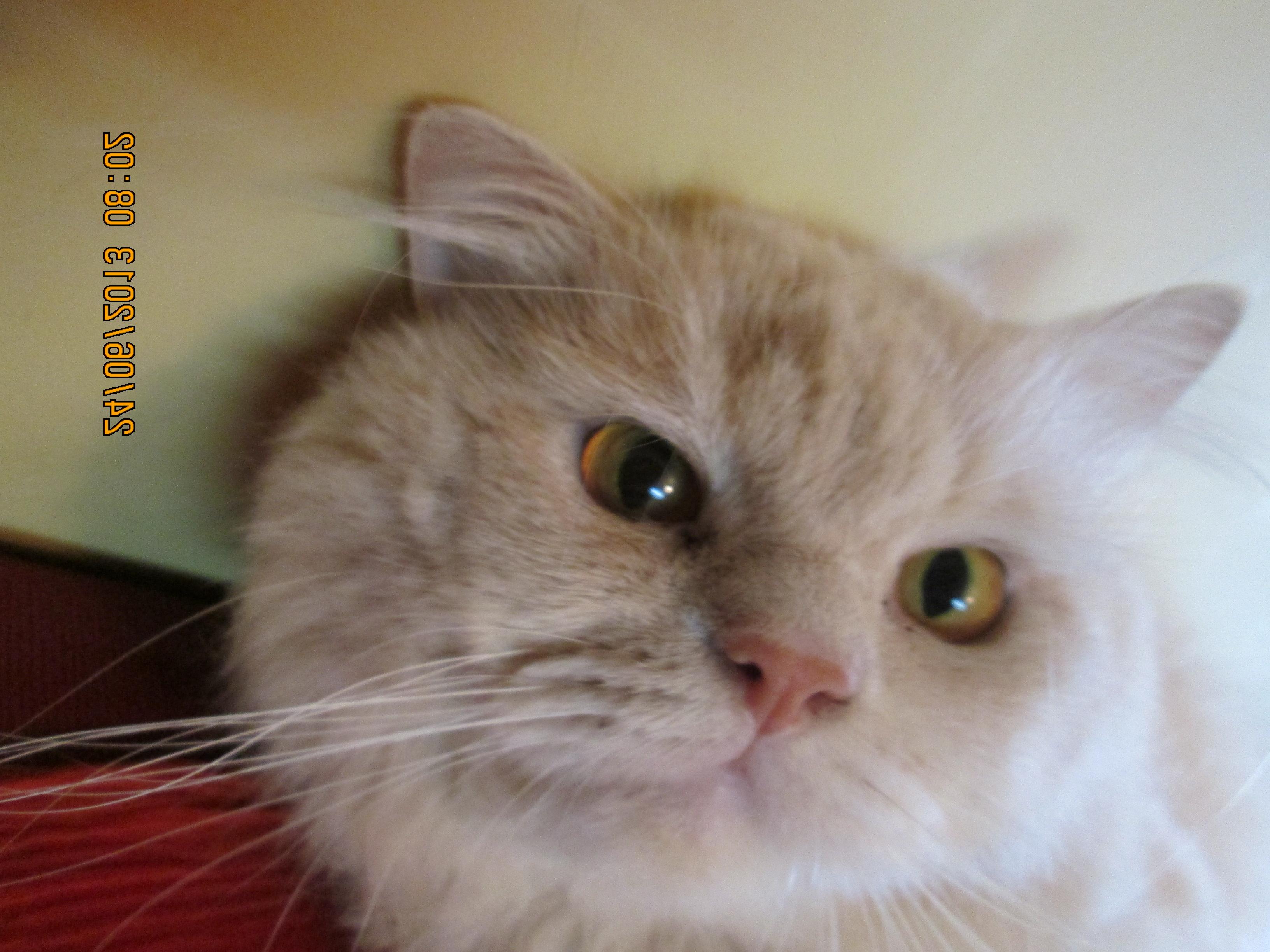 cat purr heal
