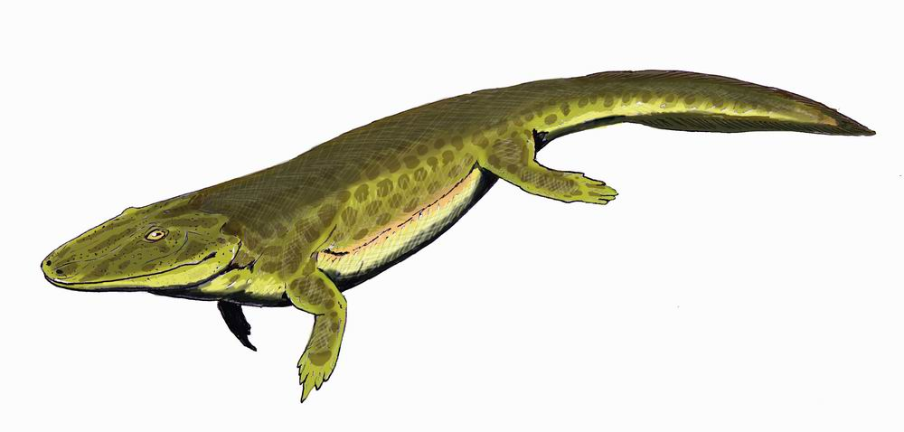 When did amphibians first appear on Earth?