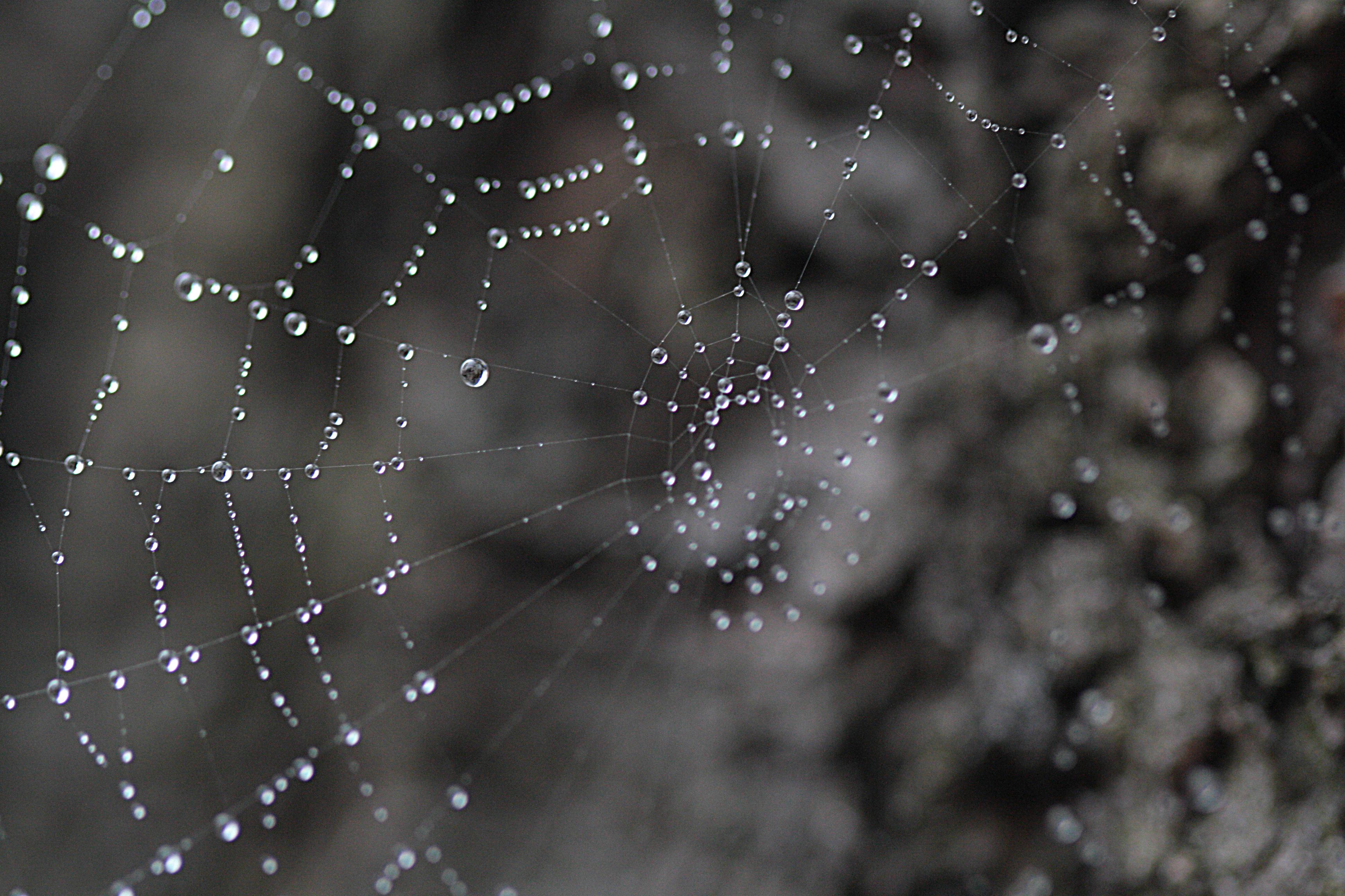 Ein Spinnennetz im Morgentau