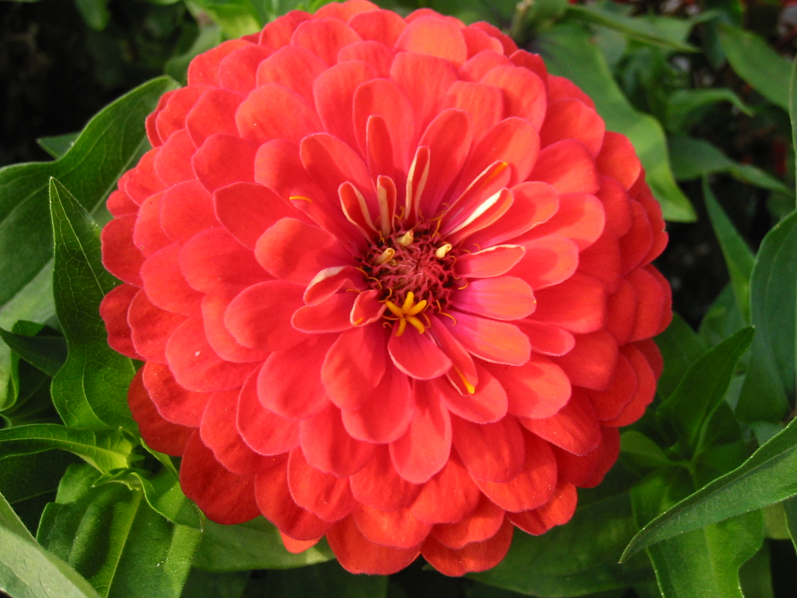 Цветок на букву ю фото и название цветка