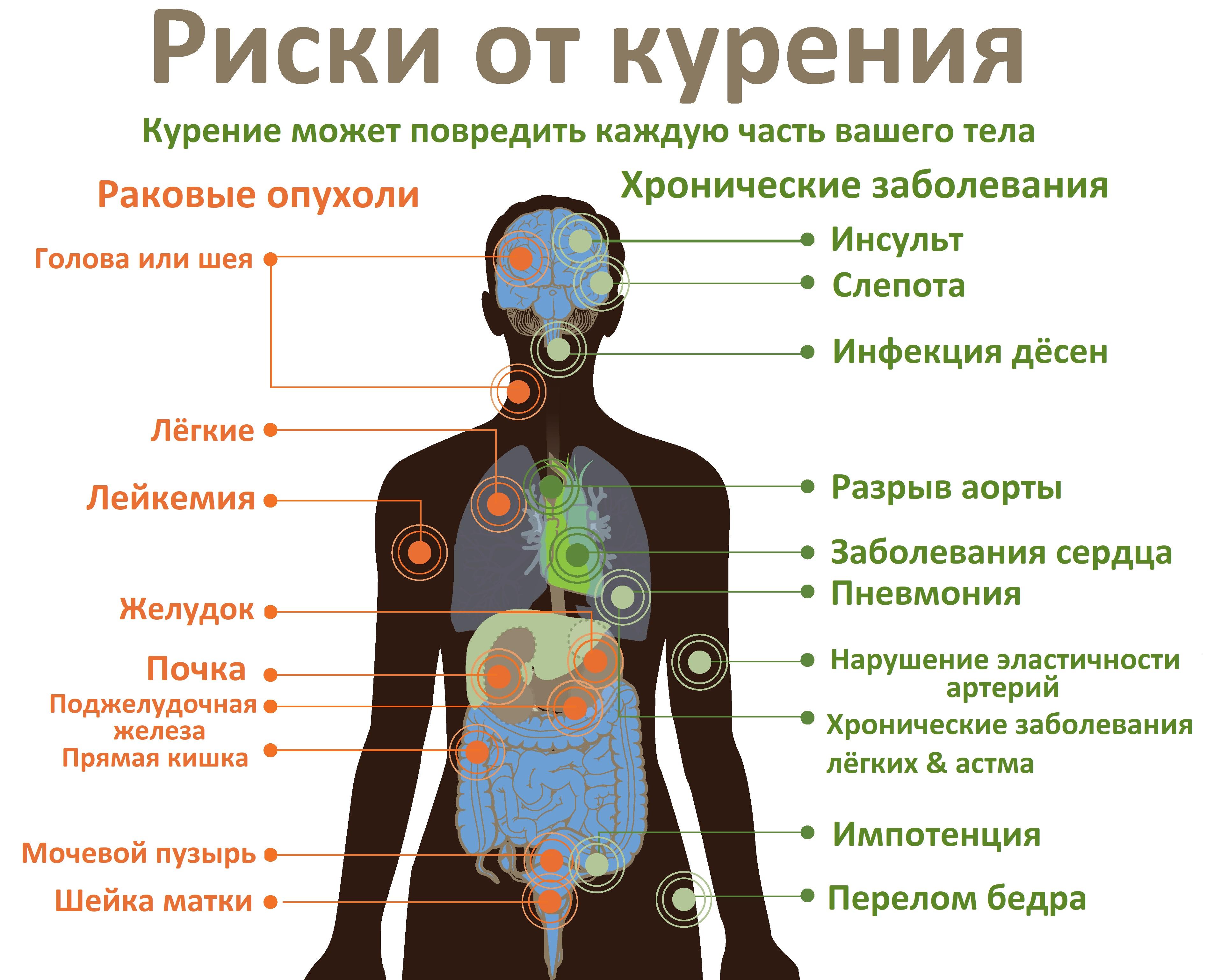 Последствия курение табачных изделий business class купить сигареты