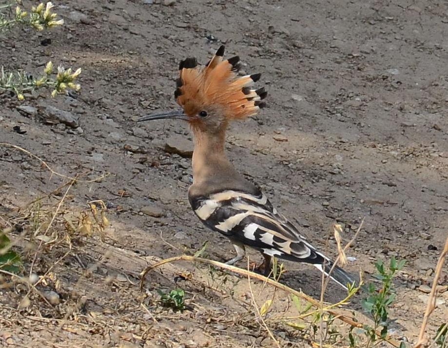 Фото птиц донецкой области