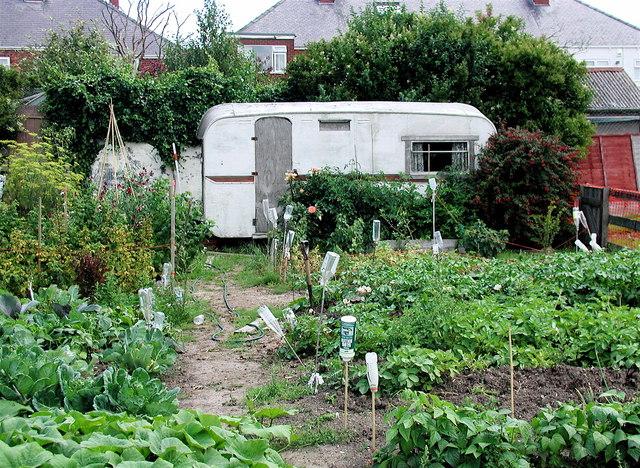FileAllotment Gardens Withernsea Geographorguk