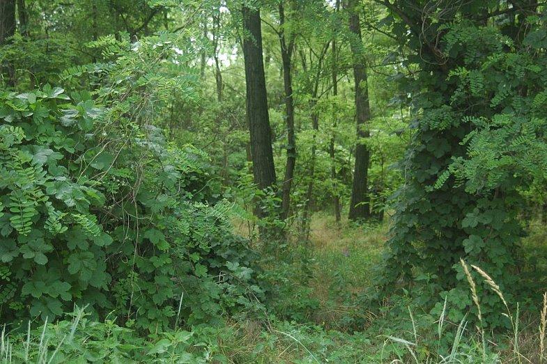 Black Hill Nature Program