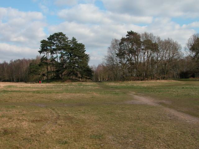 Bronze age burial mounds on Petersfield Heath - geograph.org.uk - 240