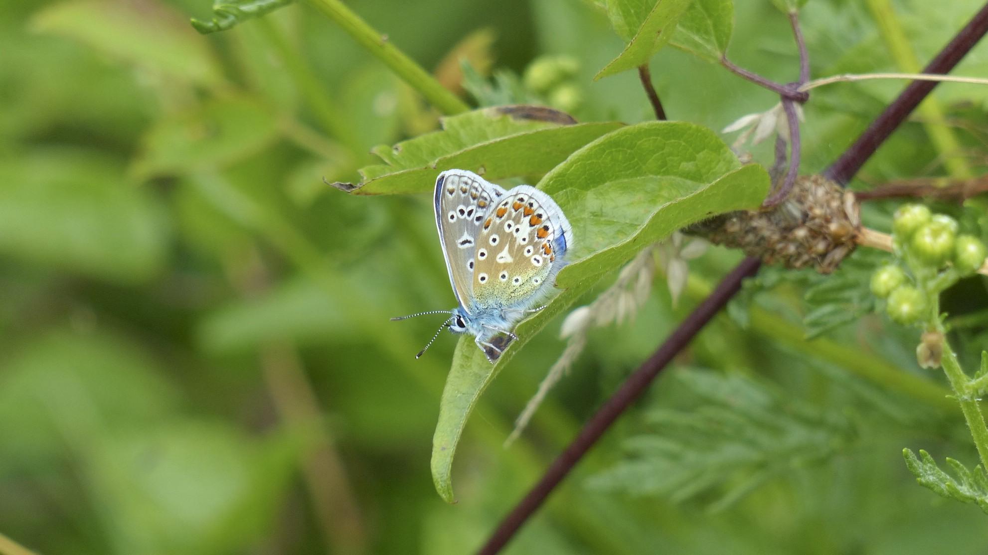 Butterfly Rings For Women