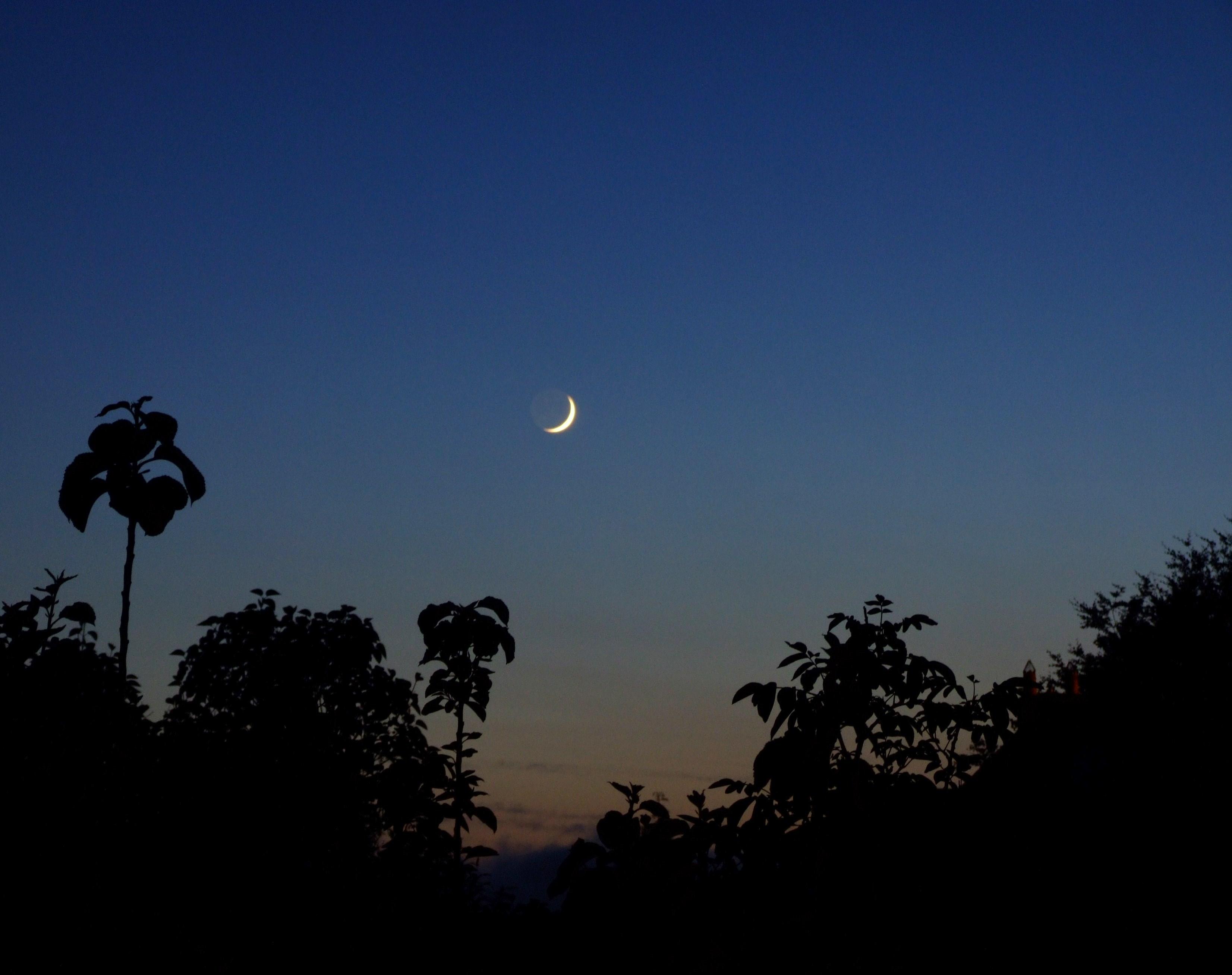 File crescent moon 2558144570 jpg wikimedia commons for Cuarto menguante de la luna