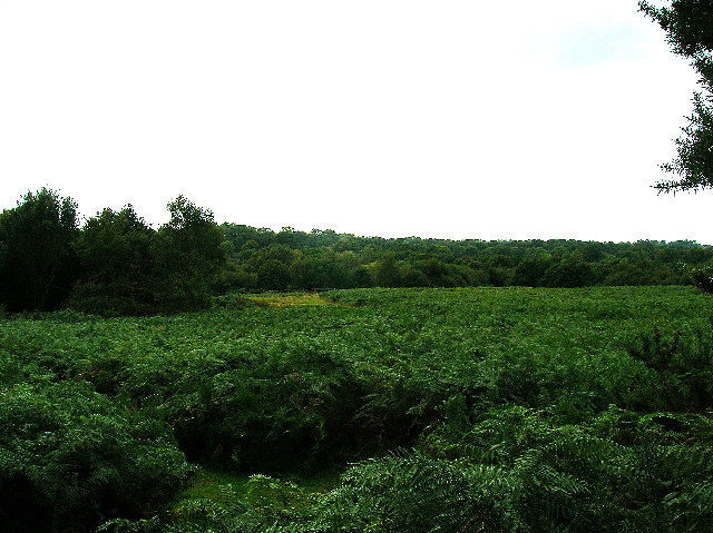 Ditchling Common - geograph.org.uk - 57519