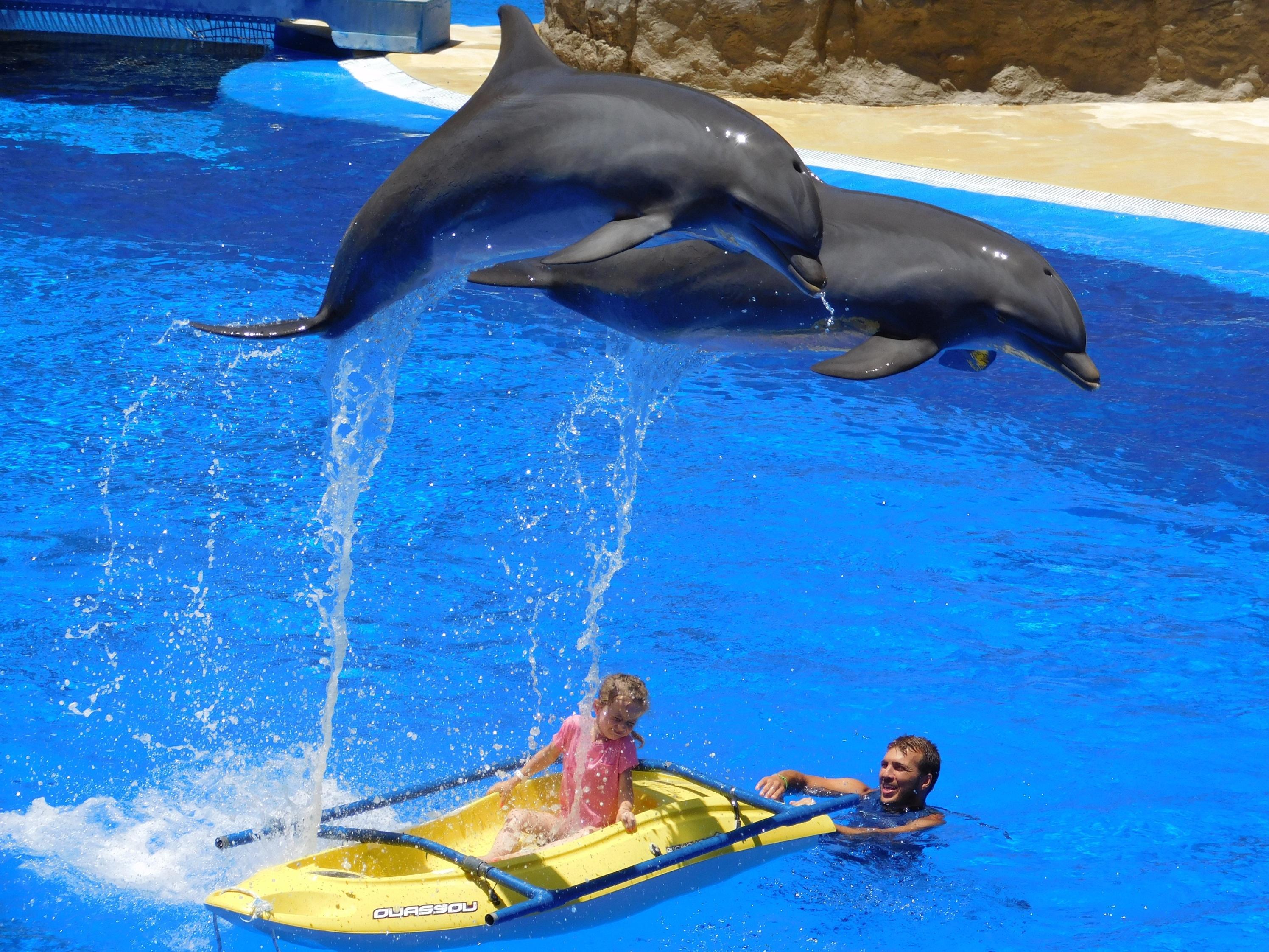 Dolphins-1170342.jpg