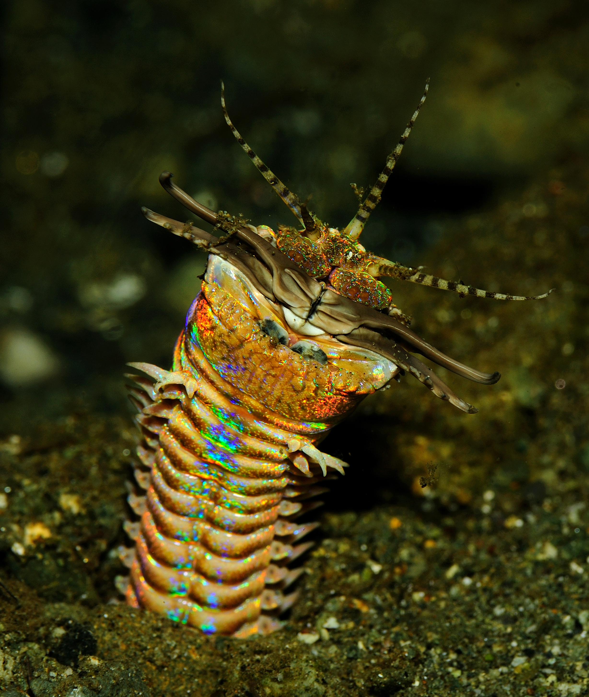 Marine worm gifs for Where can i buy worms for fishing near me