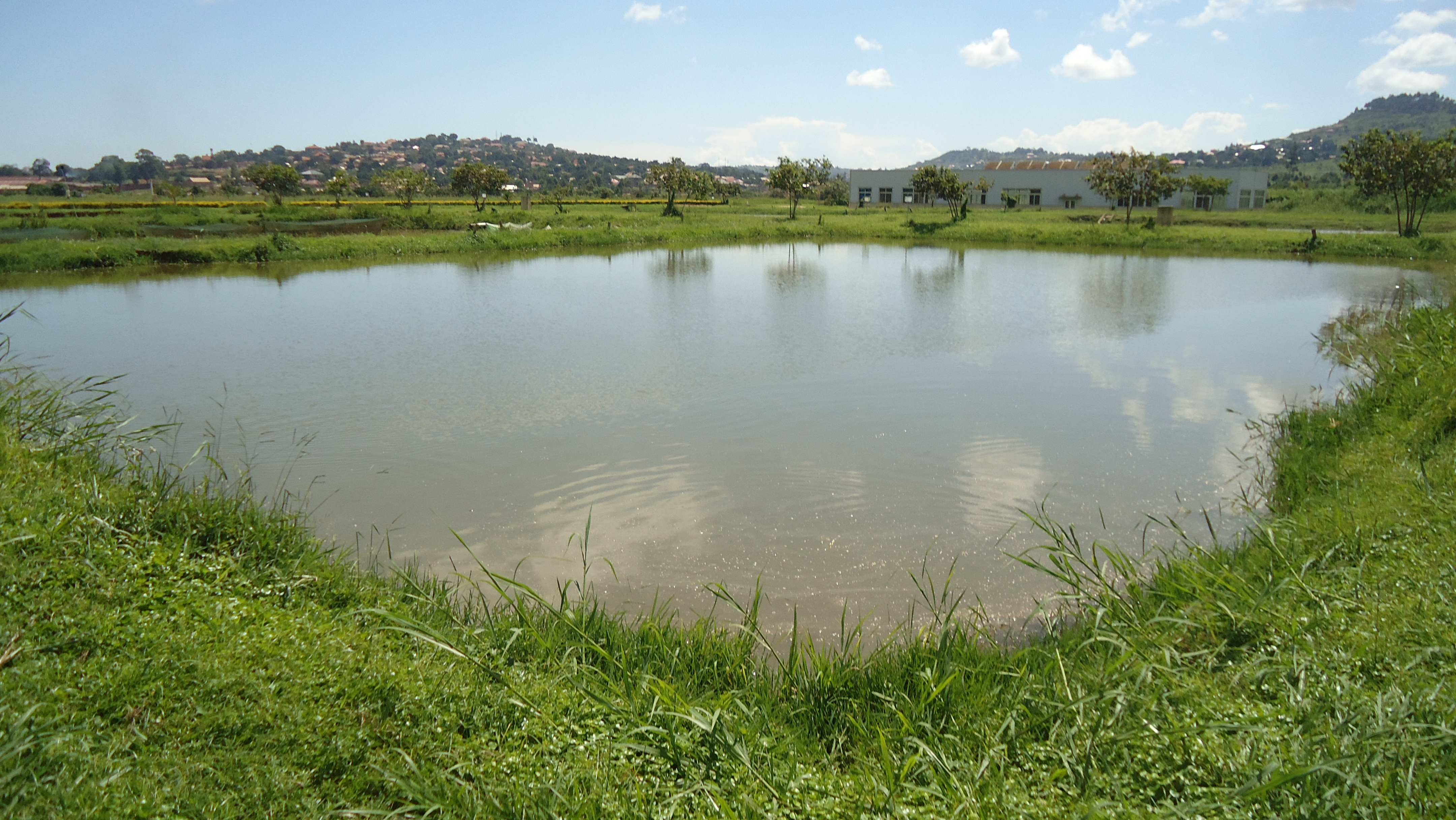 Commercial fish pond design for Pond of fish